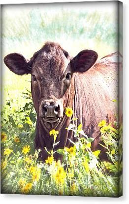 Cow In Wildflowers Canvas Print by Ella Kaye Dickey