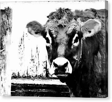 Cow  Pen And Ink Canvas Print by Carol Lloyd