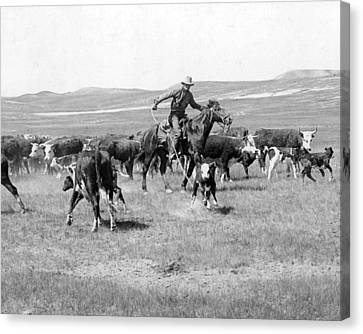 Cowboy Western Cattle Drive Vintage  Canvas Print by Retro Images Archive