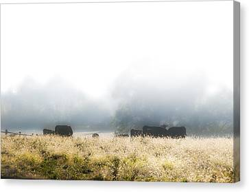 Cows In A Foggy Field Canvas Print by Bill Cannon
