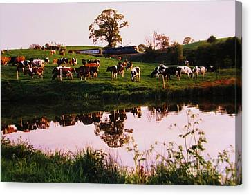 Cows In The Canal Canvas Print by Martin Howard