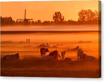 Cows In The Mist Canvas Print by Roeselien Raimond