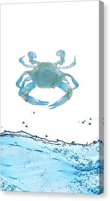 Crab Strolling Around Canvas Print by Art Spectrum