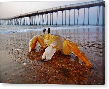 Crab Waiting On The Sunrise Avon Pier Canvas Print by Mark Lemmon