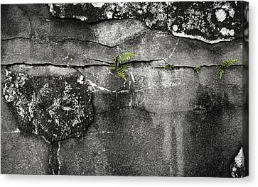 Crack Of Life Canvas Print by Stellina Giannitsi