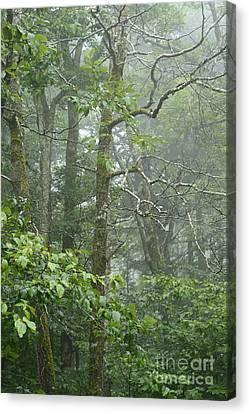 Cranberry Wilderness Mist Canvas Print by Thomas R Fletcher