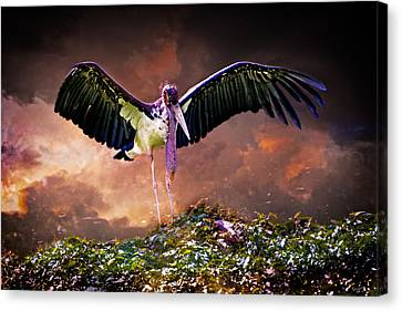 Crane The Lawyer Canvas Print by Chris Lord