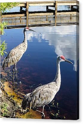 Cranes At The Lake Canvas Print by Zina Stromberg