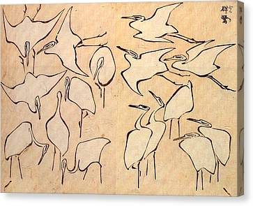 Cranes From Quick Lessons In Simplified Drawing Canvas Print by Philip Ralley