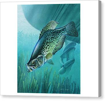 Crappie And Boat Canvas Print by JQ Licensing