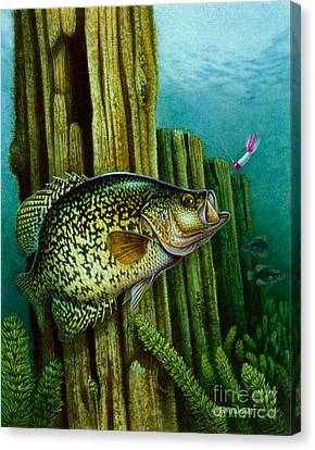 Crappie And Posts Canvas Print by Jon Q Wright