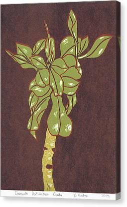 Crassula Portulacea Quata Canvas Print by N Gedze