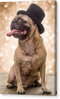 Crazy Top Dog Canvas Print by Edward Fielding