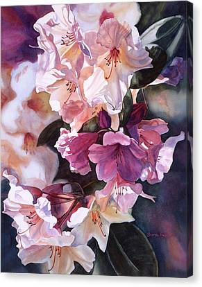 Creamy Rhododendron Canvas Print by Sharon Freeman