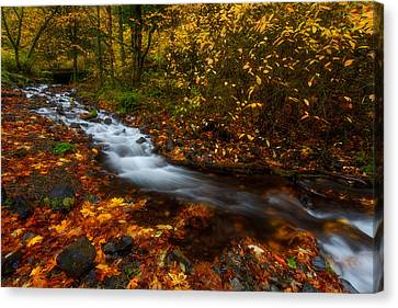 Creekside Colors Canvas Print by Darren  White