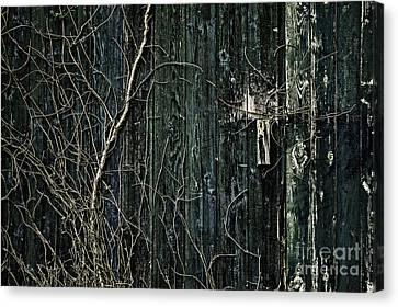 Creeper Canvas Print by Andrew Paranavitana