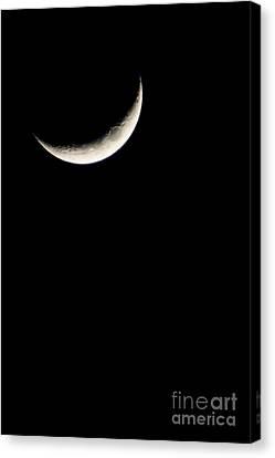 Crescent Moon  Canvas Print by Thomas R Fletcher