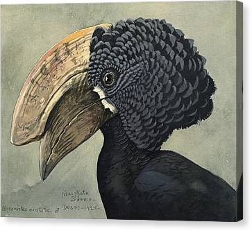 Crested Hornbill Canvas Print by Louis Agassiz Fuertes