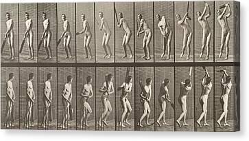 Cricketer Canvas Print by Eadweard Muybridge