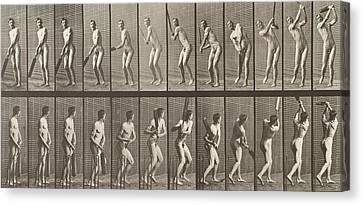 Cricketer Canvas Print by Eadweard Muybridge