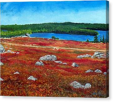 Crimson Blueberry Barren Canvas Print by William Tremble