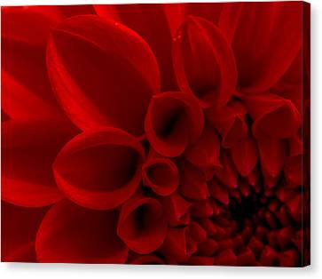 Crimson Dahlia Macro Canvas Print by Kaleidoscopik Photography