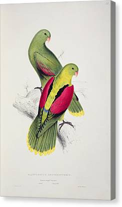Crimson Winged Parakeet Canvas Print by Edward Lear