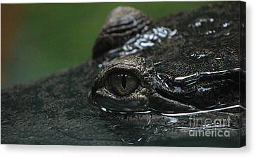 Croc's Eye-1 Canvas Print by Gary Gingrich Galleries