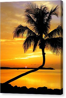 Crooked Palm Canvas Print by Karen Wiles