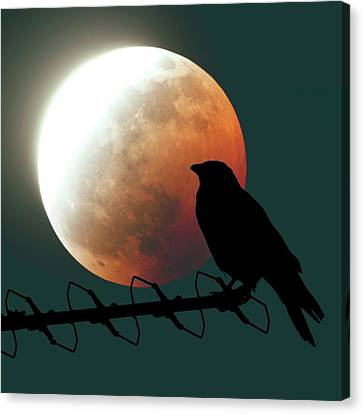 Crow And Lunar Eclipse Canvas Print by Detlev Van Ravenswaay