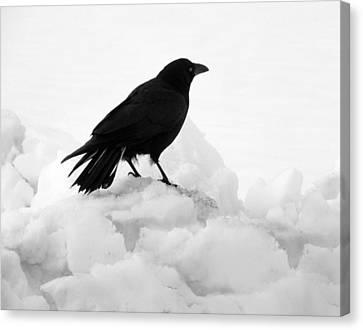 Crow In Winter Canvas Print by Gothicolors Donna Snyder