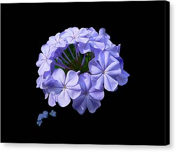 Crown Of Glory Canvas Print by Doug Norkum