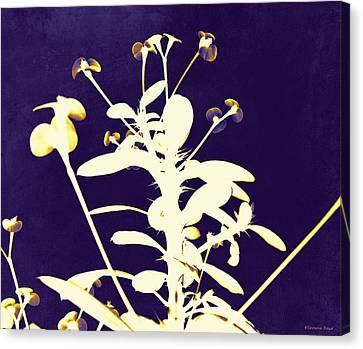 Crown Of Thorns - Indigo Canvas Print by Shawna Rowe