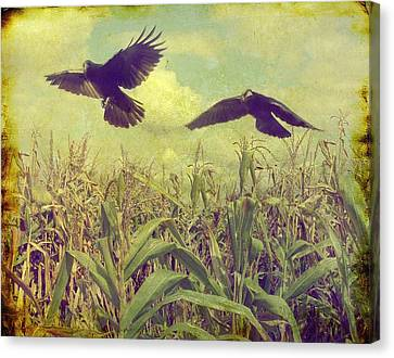 Crows Of The Corn Canvas Print by Gothicrow Images