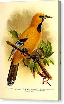 Curacao Oriole Canvas Print by J G Keulemans