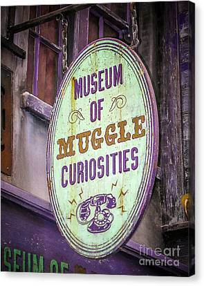 Curiosities Canvas Print by Perry Webster