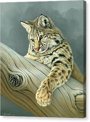 Curiosity - Young Bobcat Canvas Print by Paul Krapf