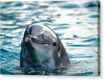 Curious Dolphin Canvas Print by Mariola Bitner