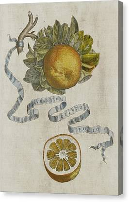 Curled Leaf Orange Canvas Print by Cornelis Bloemaert