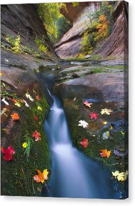 Cut Into Autumn Canvas Print by Peter Coskun