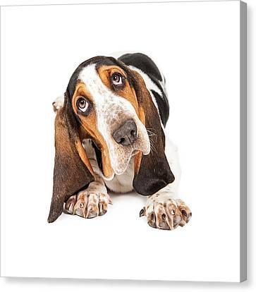 Cute Basset Puppy Tilting Heard Canvas Print by Susan  Schmitz