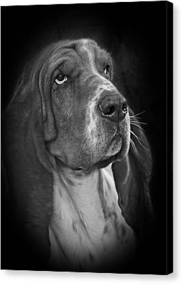 Cute Overload - The Basset Hound Canvas Print by Christine Till