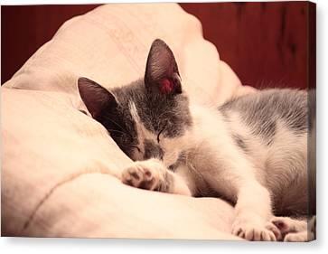 Cute Sleeping Kitten Canvas Print by Tilen Hrovatic