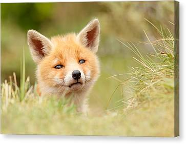 Cutie Face _red Fox Kit Canvas Print by Roeselien Raimond