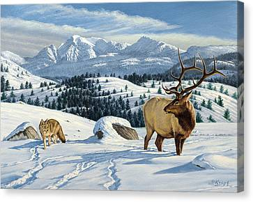 Cutoff Mountain -  Elk And Coyote   Canvas Print by Paul Krapf