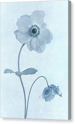 Cyanotype Windflowers Canvas Print by John Edwards