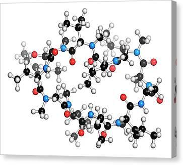 Cyclosporine Immunosuppressant Drug Canvas Print by Molekuul