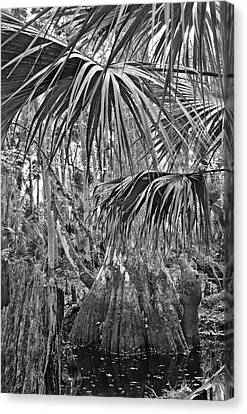 Cypress And Palm Canopy. Green Swamp Wildlife Management Area Polk County.    Canvas Print by Chris  Kusik