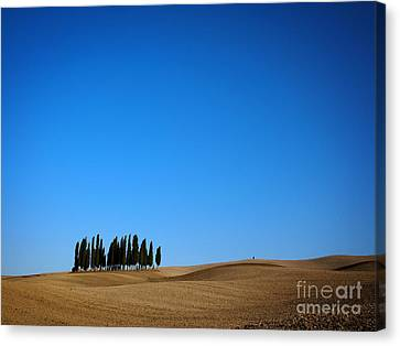 Cypress Forest In The Barren Rolling Hills Of Tuscany Canvas Print by IPics Photography