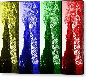 Cypress Canvas Print by Rick Todaro